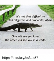 its-not-that-difficult-to-tell-alligators-and-crocodiles-apart-19082965.png